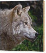 Arctic Wolf Portrait Wood Print by Michael Cummings