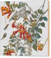 Audubon: Hummingbird Wood Print by Granger