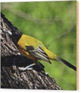Audubon Oriole Wood Print