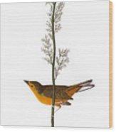Audubon: Warbler, (1827) Wood Print