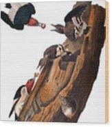 Audubon: Woodpecker Wood Print