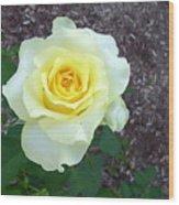 Australia - Yellow Rose Flower Wood Print