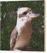 Australia - Kookaburra Full Body Look Wood Print