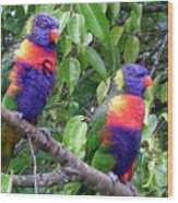 Australia - Two Brightly Coloured Lorikeets Wood Print