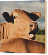 Australian Cows Wood Print