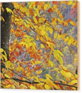 Autumn Beech Leaves Wood Print