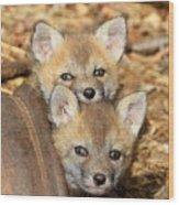 Baby Fox Kits Wood Print