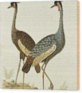 Balearica Regulorum Grey Crowned Crane, Robert Jacob Gordon, 1777 - 1786 Wood Print