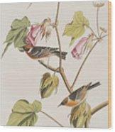 Bay Breasted Warbler Wood Print