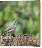 Beautiful Nuthatch Bird Sitta Sittidae On Tree Stump In Forest L Wood Print