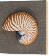 Bellybutton Nautilus - Nautilus Macromphalus Wood Print