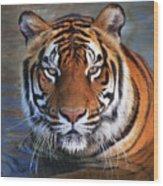 Bengal Tiger Laying In Water Wood Print