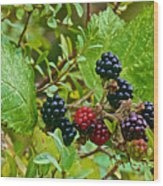 Berries In Vicente Perez Rosales National Park Near Puerto Montt-chile  Wood Print