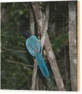 Birds From Coba Wood Print