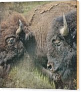 Bisons Wood Print