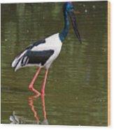 Black-necked Stork Wood Print