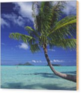 Bora Bora, Palm Tree Wood Print