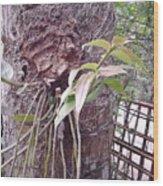 Bordoloi Wood Print