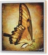 Broad Banded Swallowtail Wood Print