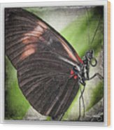 Brush-footed Butterfly Wood Print