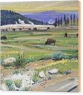 Buffaloes In Yellowstone Wood Print