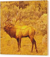 Bull Elk Calling Out Wood Print