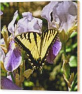 Butterfly Collection Design Wood Print