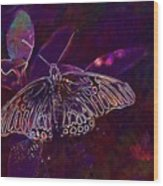 Butterfly Insect Wing Wildlife Bug  Wood Print