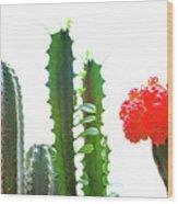 Cactus Plants Wood Print