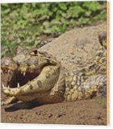 Caiman Crawling Into Yakuma River Wood Print
