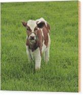 Calf In A Pasture Wood Print