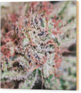 Cannabis Macro Wood Print