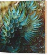 Carpet Anemones Wood Print