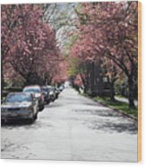 Cherry Blossom In Vancouver City Wood Print