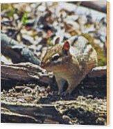 Chipmunk At Heckrodt Wood Print