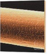 Chipmunk Hair, Sem Wood Print