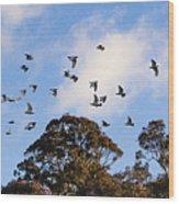 Cockatoos - Canberra - Australia Wood Print