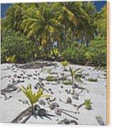 Coconut Palms On A Polynesian Beach Wood Print