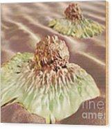 Colon Cancer Cells, Illustration Wood Print