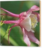 Columbine From The Songbird Series Named Robin Wood Print