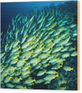 Coral Reef Scene Wood Print