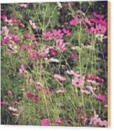 Cosmos Flowers  Wood Print