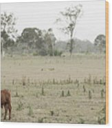Country Cow Wood Print
