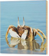 Crab On The Tropical Beach Wood Print