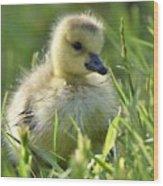 Cute Baby Goose Wood Print