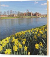Daffodils Beside The Thames At Hampton Court London Uk Wood Print