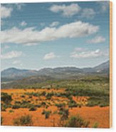 Daisies Blooming In Namaqualand 2 Wood Print