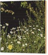 Daisy Daisy Wood Print