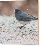 Dark Eyed Junco Wood Print