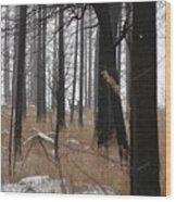 2 Deers Wood Print